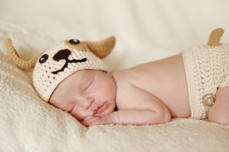 newborn wearing funny  knitted costume of dog photo