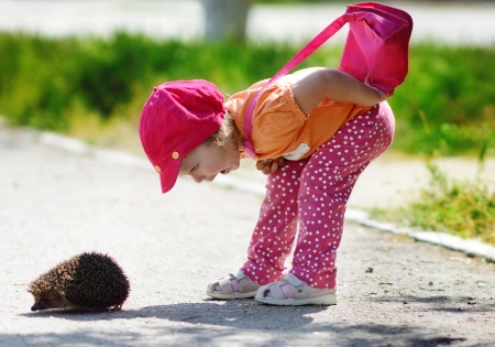 toddler girl looking at the  hedgehog