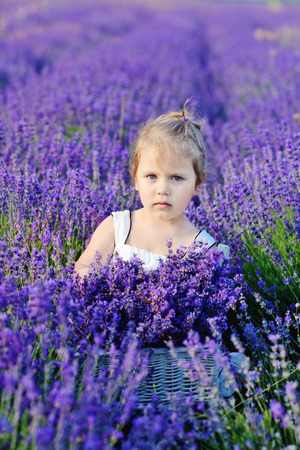 toddler girl is in a lavender field photo