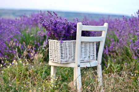 lavender in the basket near the field photo