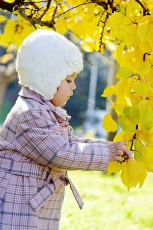toddler girl standing near fall tree photo