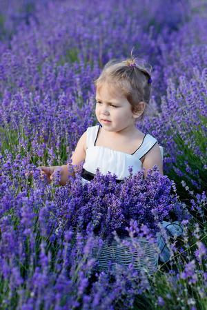 lavanda: sweet toddler girl  in a lavender field Stock Photo