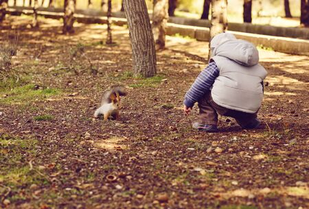 boy and squirrel in the autumn park photo