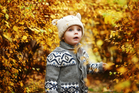 toddler boy in the golden fall forest Stock Photo