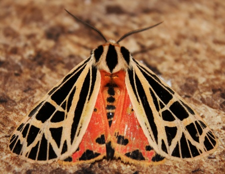 Colorful Moth Stock Photo