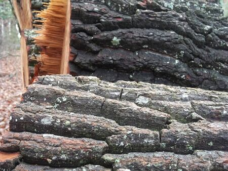 Stacked cordwood heavily barked with splinters.