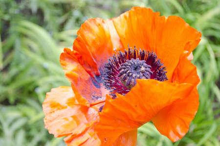 보라색 꽃가루와 오렌지 색의 꽃 스톡 콘텐츠