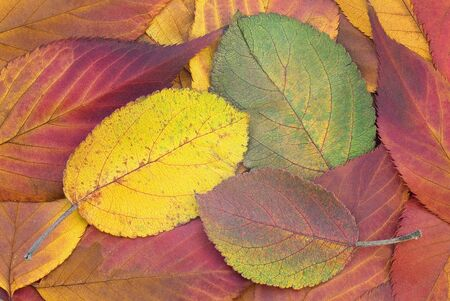fall coloredly Stock Photo