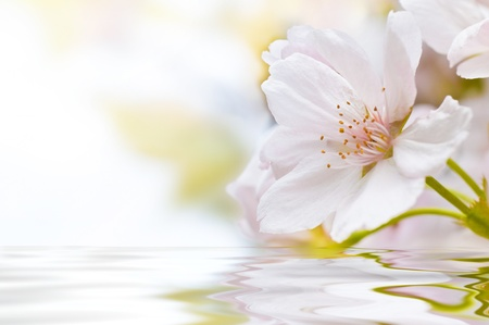 yoga to cure health: Cherry Blossom with water and waves
