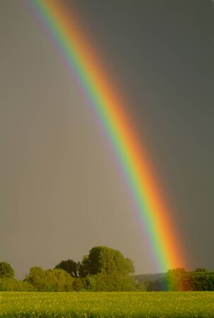 Rainbow over field with trees