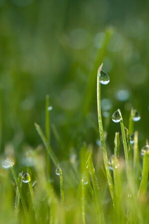 dew on grass Stock Photo