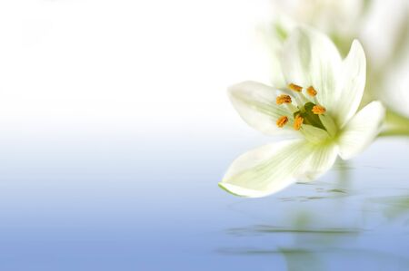 white flower with water reflection