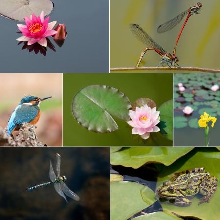 collage of a garden pond in summer photo