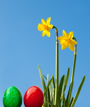 two eggs with daffodils in a panel format