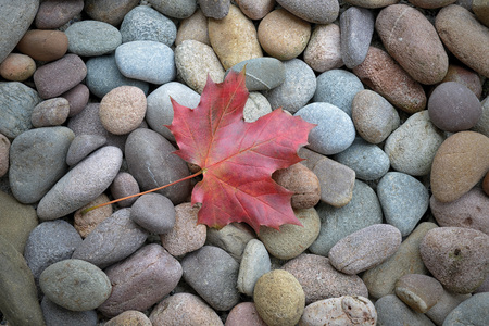 Red maple leaf on stones Stock Photo