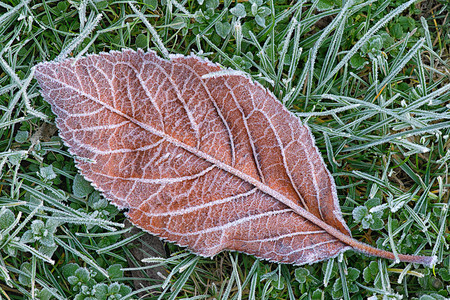 Leaf in grass with hoarfrost Stock Photo