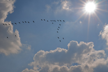 Cranes flying towards the sun