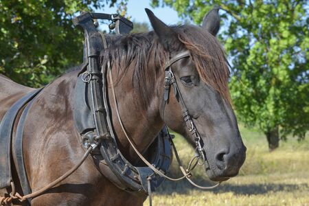 Portrait of a horse Banco de Imagens