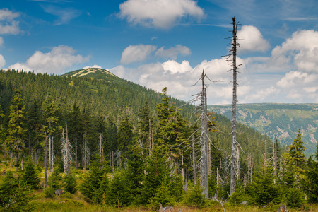 krkonose: Nice landscape with mountain and forest in Krkonose in Czech republic Stock Photo