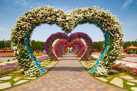 DUBAI, UAE - MARCH 28:  Hearts way in Dubai Miracle Garden in the UAE on March 28, 2015. It has over 45 million flowers. Редакционное