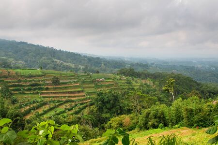 Bali landscape with rice terraces during cloudy day