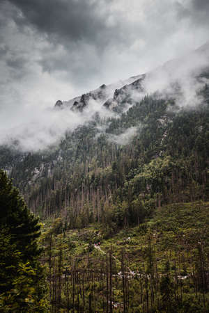 High Tatras nature during rainy day with low visibility. Standard-Bild