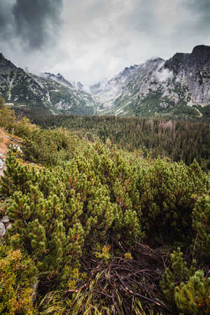 High Tatras nature during rainy day with low visibility. Фото со стока