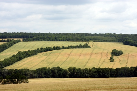 monoculture: Monoculture Stock Photo