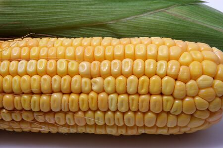 corncob: Corncob Stock Photo
