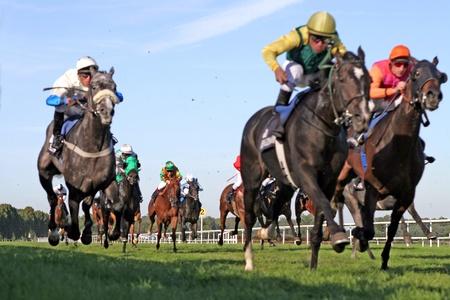 horse races: carrera de caballos