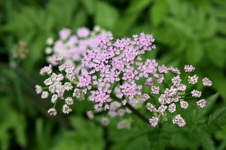 Yarrow Stock Photo - 13869367