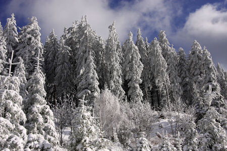 deep powder snow: Winter in the Black Forest Stock Photo