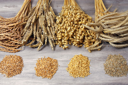 Getreidegarben mit Saat 写真素材