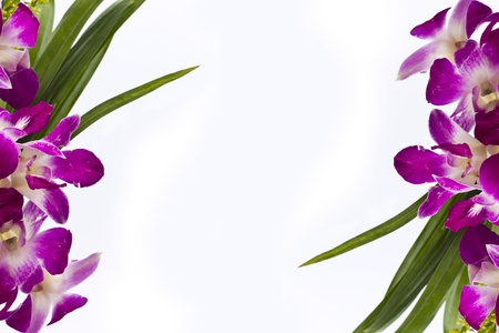 Purple orchid frame border isolated on white background. Stock Photo