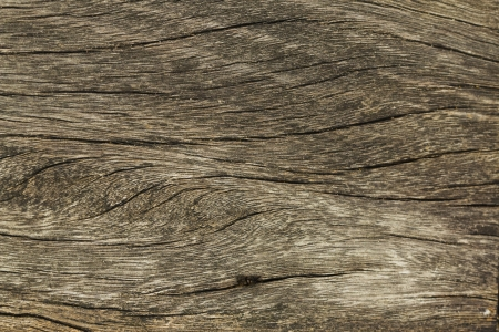A background of wood photo