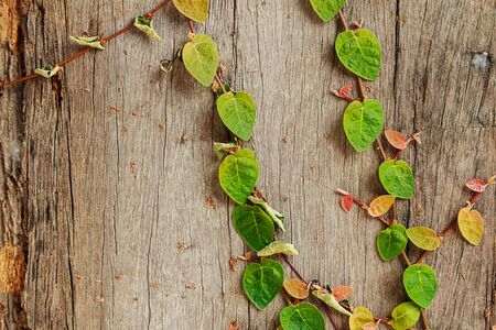 old wooden wall with ivy photo