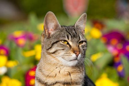 cat posing in front of colorfull garden