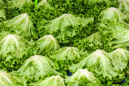 Lettuce green leafy vegetables at greengrocery stall