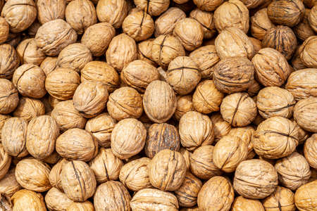 Walnuts background closeup, pile of unshelled nuts