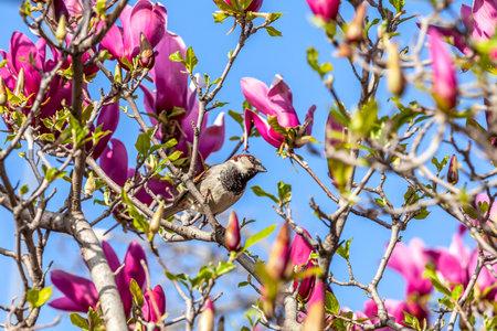 Bird in magnolia tree, Emirgan Park Istanbul - Turkey