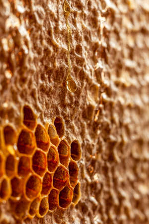 honey drop flowing on honoey frame