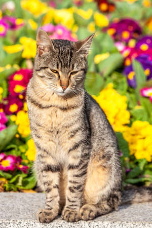 cat posing in front of colorfull garden, sunny day Banque d'images