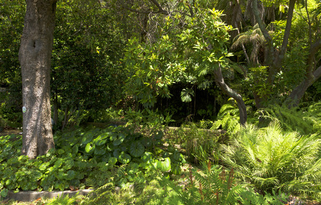 botanical gardens: Famous Tropical Botanical Gardens in Funchal town, Madeira island, Portugal