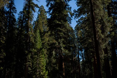 Trip to Sequoia National Forest