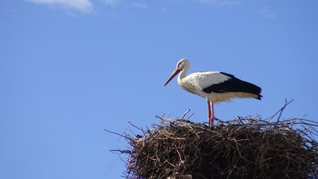 Stork on the nest over a column with blue sky at the town of Spain