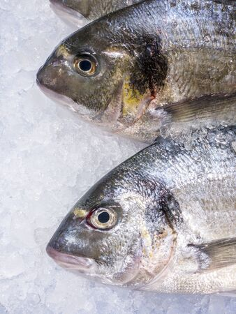 Close Up of fresh sea bream in a supermarket refrigerated display case. Uncooked fresh seafood. Fresh gilt-head fish on ice at market store shop. Sea food concept