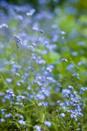 Vertical photo of blue field flower photo