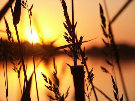 contoured: Puesta de sol sobre el r�o vistos detr�s de contorneada ca�as de hierba.
