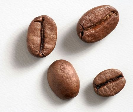 coffee harvest: Coffeebeans. Stock Photo