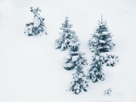 Bäume unter dem Schnee.